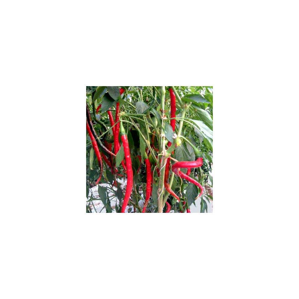 Cayenne Long Slim - kajenský pepř - semena chilli papriček - 10 ks