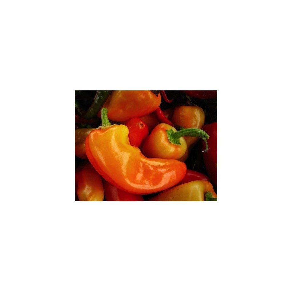 Jalapeno Orange - oranžové chilli papričky - semena chilli papriček - 10 ks