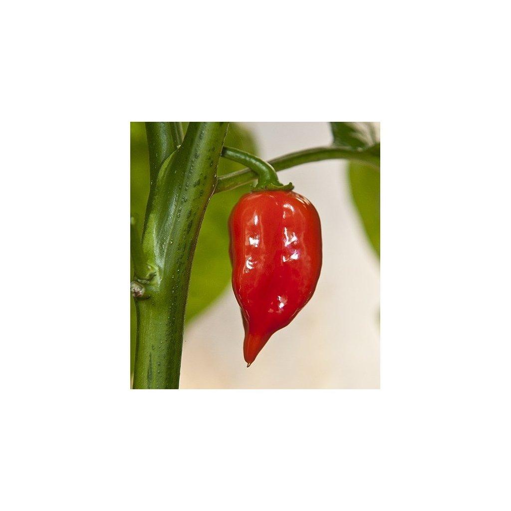 Habanero Maya Red červené, extrémně pálivé chilli papričky - semena papriček - 10 ks