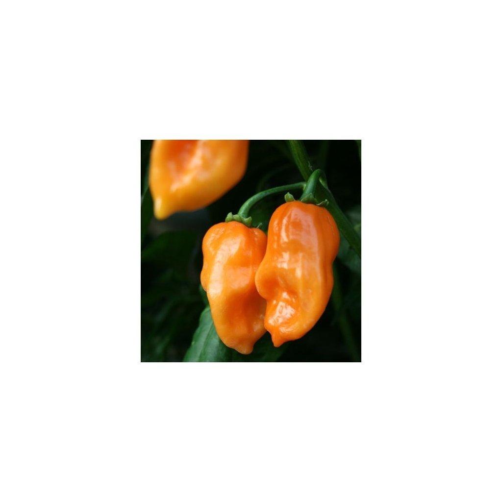 Habanero Orange oranžové, extrémně pálivé chilli papričky - semena papriček - 10 ks