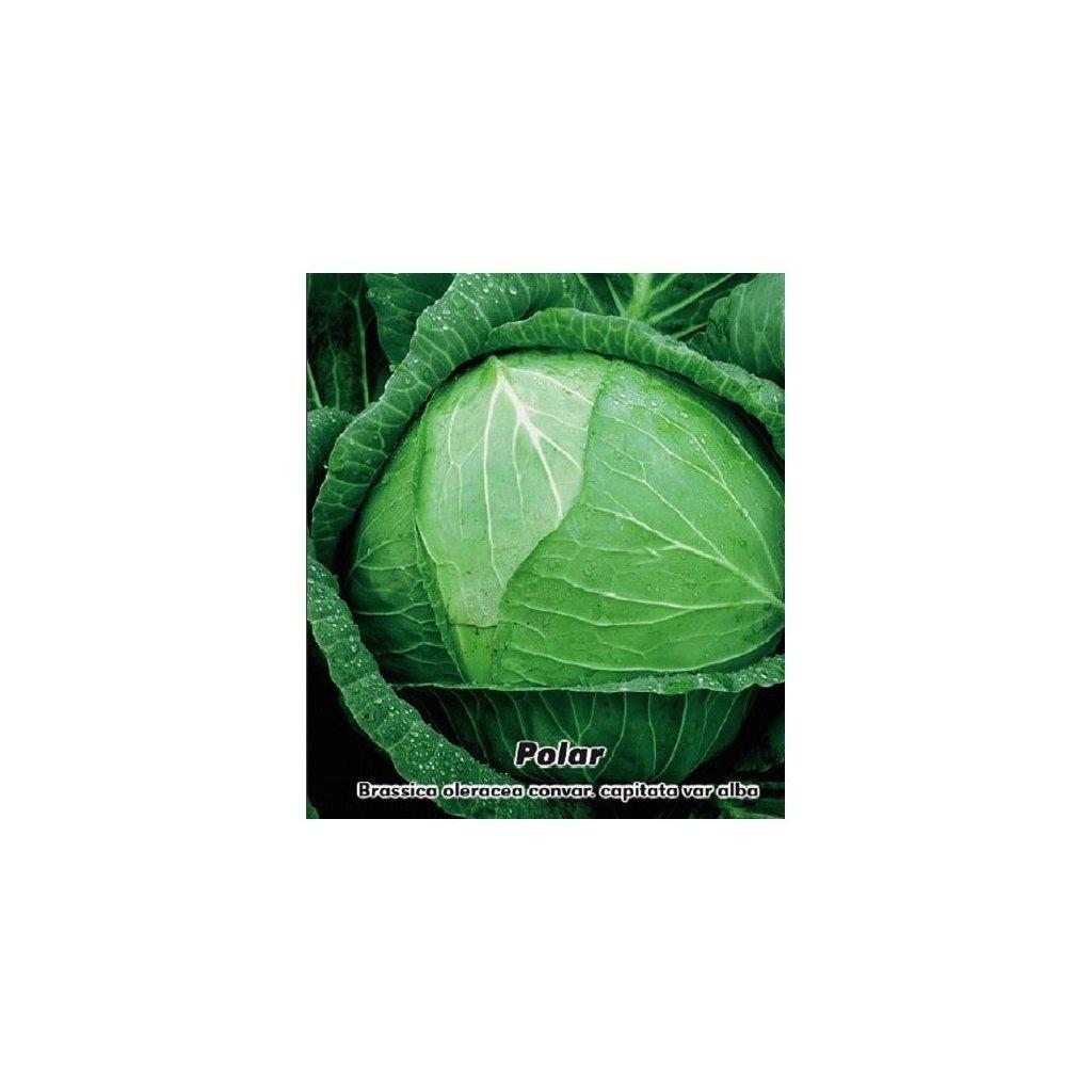 Bílé zelí hlávkové Polar - semena zelí 0,5 g, 120 ks