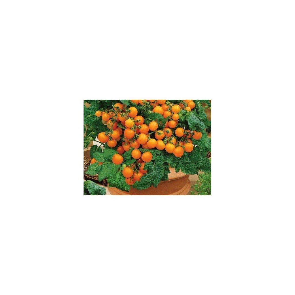 Rajče balkonové keříčkové oranžové Venus - semena rajčat 0,2 g, 70 ks