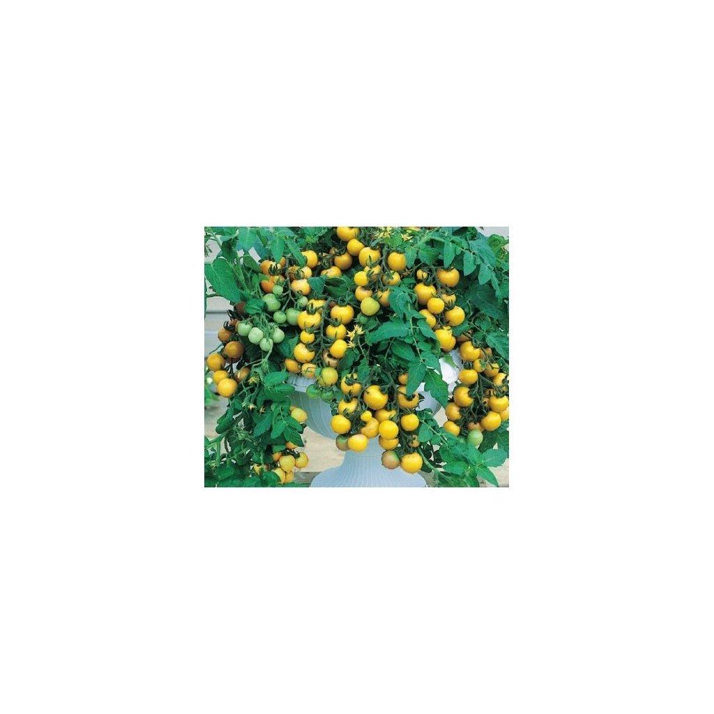 Rajče balkonové keříčkové žluté Aztek - semena rajčat 0,2 g, 70 ks