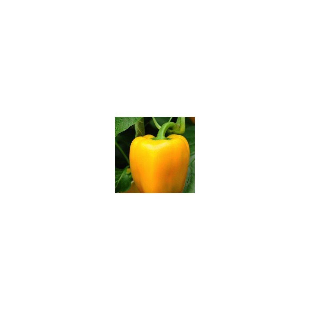 Paprika zeleninová žlutá - Mystery - semena papriky - 0,3 g, 40 ks