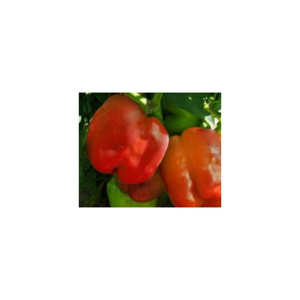 Paprika zeleninová červená - Granova - semena papriky - 0,4 g, 50 ks