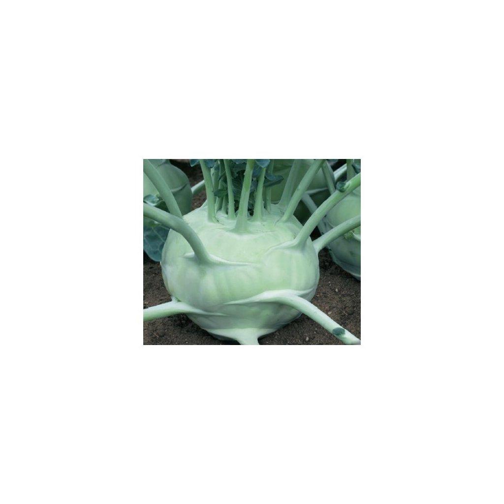 Kedluben pozdní bílý - Gigant - semena kedlubny 0,8 g, 220 ks