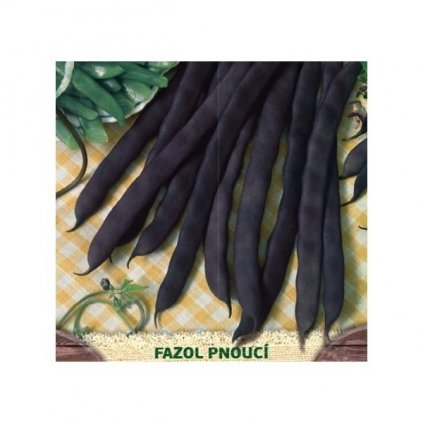 Blauhilde - fazol pnoucí fialový - semena fazole 2,5 g