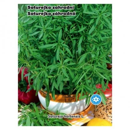 Saturejka zahradní - semena saturejky 0,3 g, 420 ks