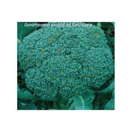 Brokolice Limba - semena brokolice 0,5 g, 120 ks