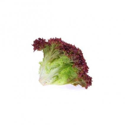 Salát listový červenolistý Lollo Rosso - semena salátu 0,4 g, 320 ks
