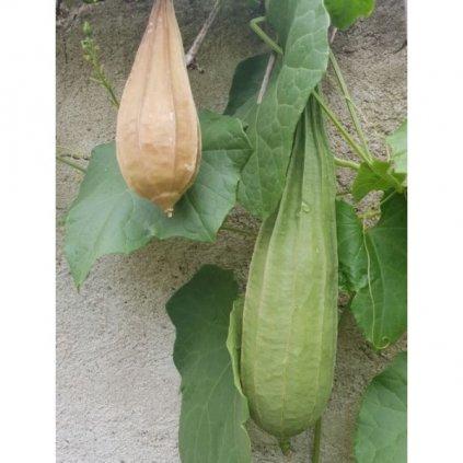 Lufa ostrohranná (Luffa acutangula) semena lufy- 5 ks