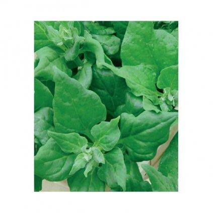 Špenát novozélandský, čtyřboč - Tetragonia tetragonioides - semena čtyřboče 2 g, 60 ks