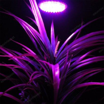 LED žárovka fialovo-červená, 3W E27 pro rostliny - květ