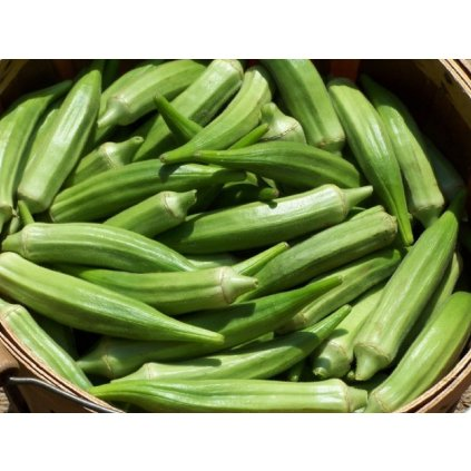 Okra - Ibiškovec jedlý (Abelmoschus esculentus) - odrůda Clemson Spineless - 15 semen