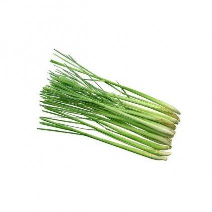 Citronová tráva (lemongrass) semena - 50-70 ks