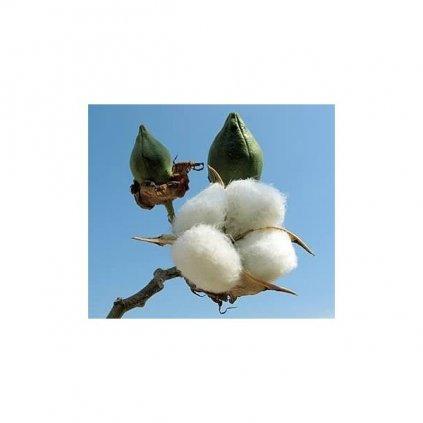 Bavlník bylinný (Gossypium herbaceum) semena bavlníku - 5 ks