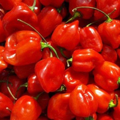 Habanero Red červené, extrémně pálivé chilli papričky - semena čili papriček - 10 ks