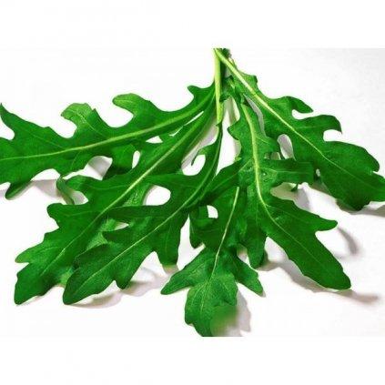 Roketa setá, Rukola - Rucola - semena rukoly 2 g