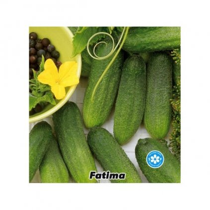 Okurka nakládačka jemnoostná F1 Fatima - semena okurky 1 g, 30 ks