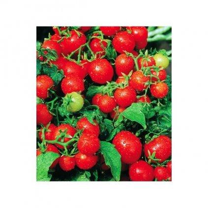 Rajče balkonové keříčkové Balkonzauber - semena rajčat 0,2 g, 70 ks