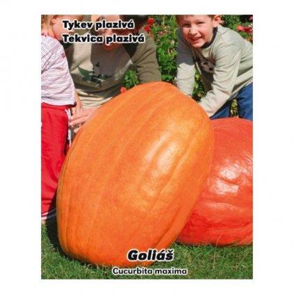Dýně Goliáš - tykev velkoplodá plazivá - semena tykve 8 ks, 3 g