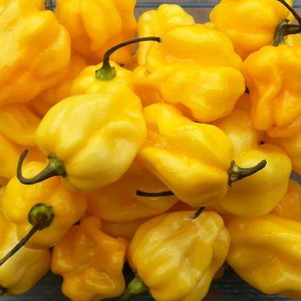 Habanero Yellow žluté, extrémně pálivé chilli papričky - semena papriček - 10 ks