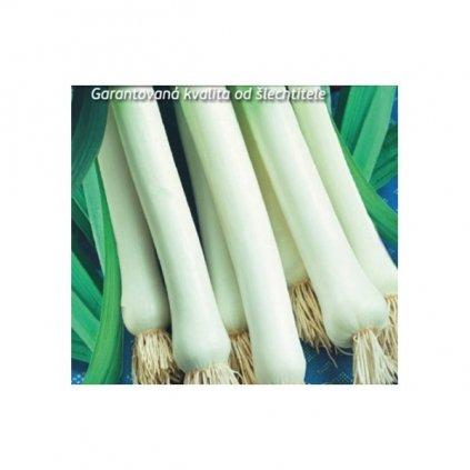 Pórek - pór pravý letní Golem - semena pórku 1,5 g, 300 ks