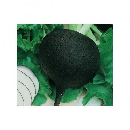 Ředkev kulatá černá - semena ředkve 3 g, 150 ks