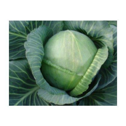 Bílé zelí hlávkové Holt - semena zelí 0,5 g, 120 ks