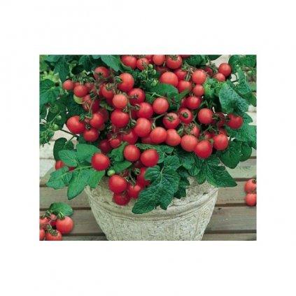 Rajče balkonové keříčkové červené Vilma - semena rajčat 0,2 g, 70 ks