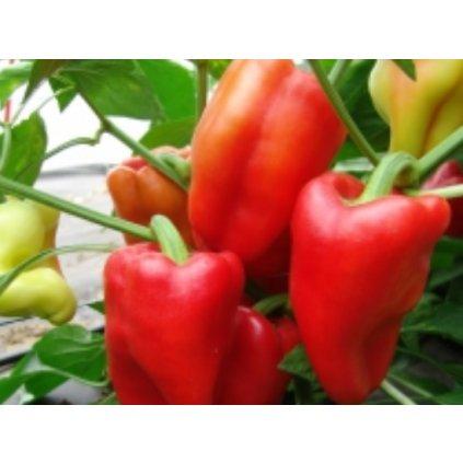 Paprika zeleninová červená - Andrea - semena papriky - 0,4 g, 50 ks