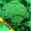 Brokolice Verde Calabrese - semena brokolice 1 g, 250 ks