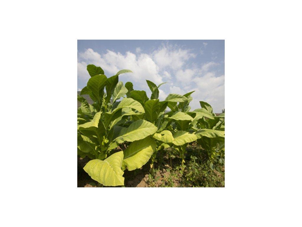 TPA Tobacco (Tabák) Aroma
