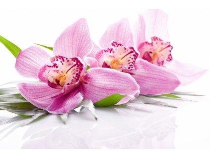 Sasami Orchidea (Orchidej) Aroma