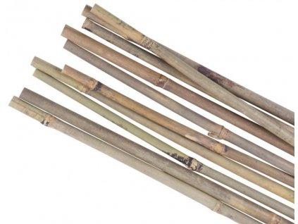Tyč opěra k rostlinám bambus ¤14-16mm/180cm