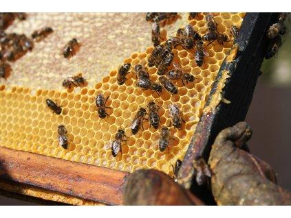 včelí vosk žlutý 2