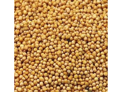Hořčičné semínko žluté - sareptská hořčice