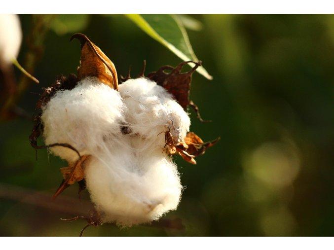cotton 615103 960 720
