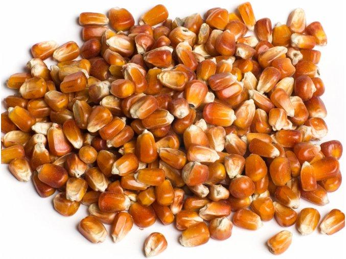g104 kukurice obyc