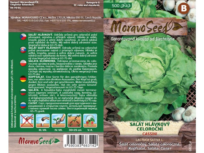66314 Salat Cassini