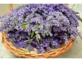 lavender 4021968 1280