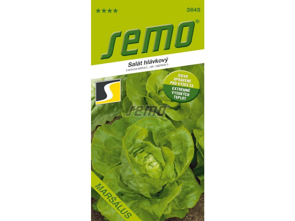3845 semo zelenina salat hlavkovy marsalus (1)