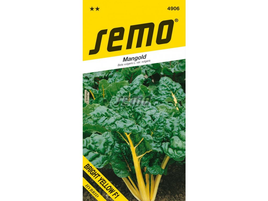 4906 semo zelenina mangold bright yellow