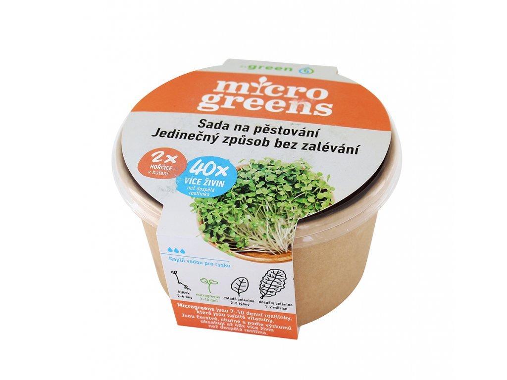 microgreens hořčice