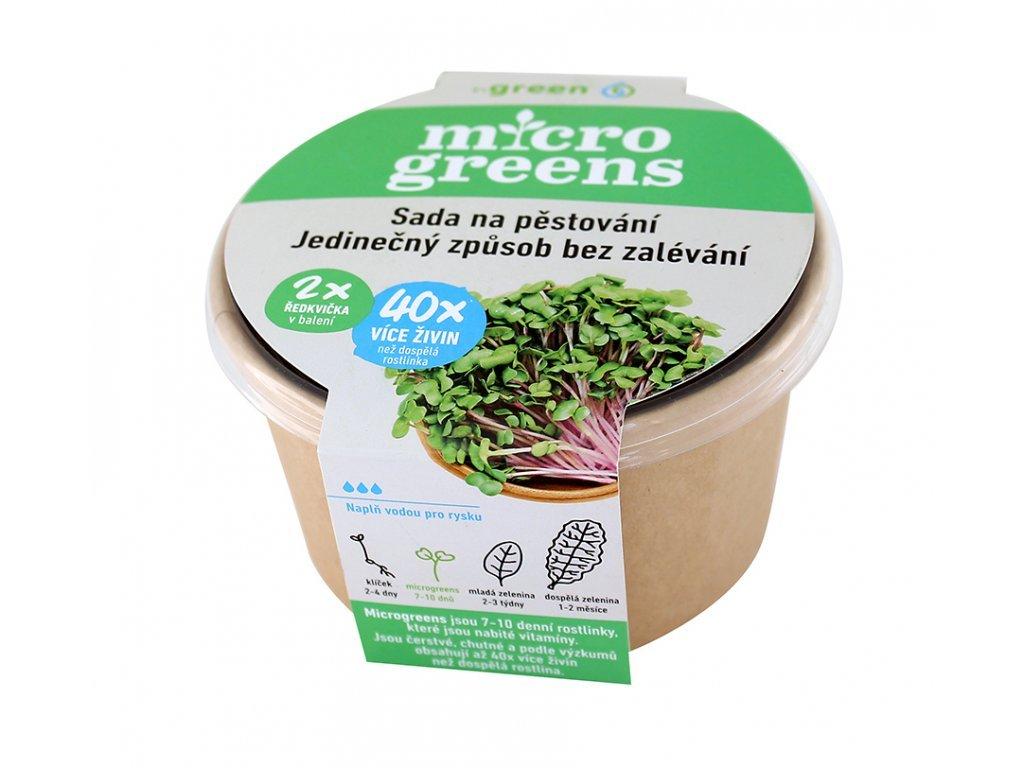 microgreens ředkvička