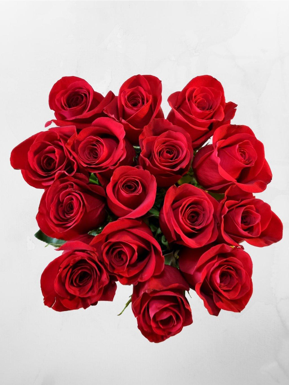 15 růží ES (1)