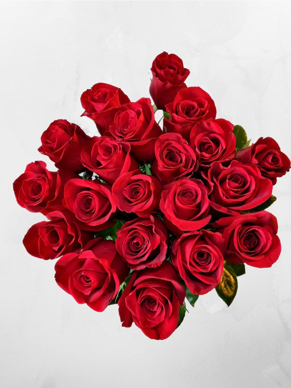 růže ES 25+