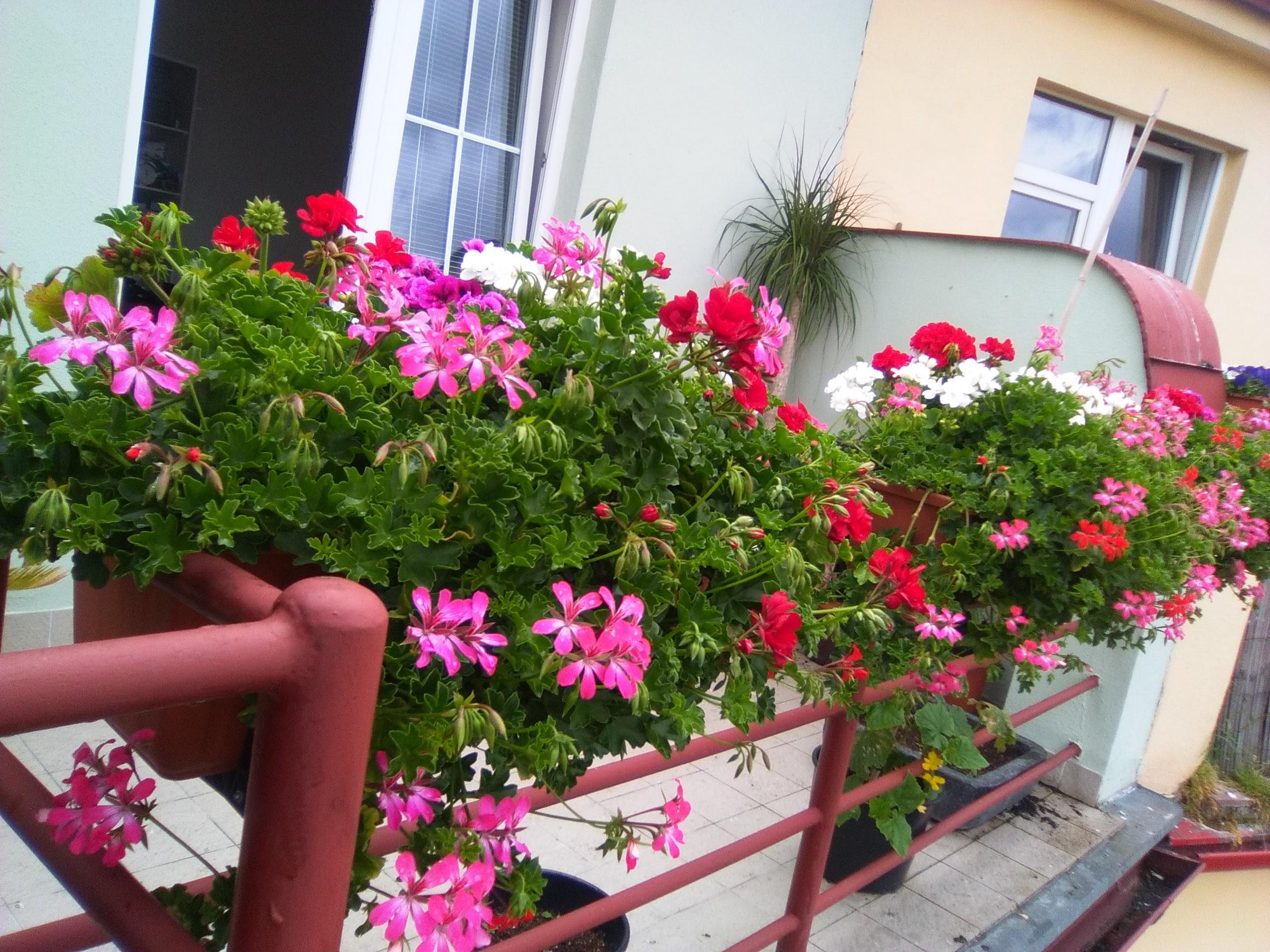 Terasy, balkony 1