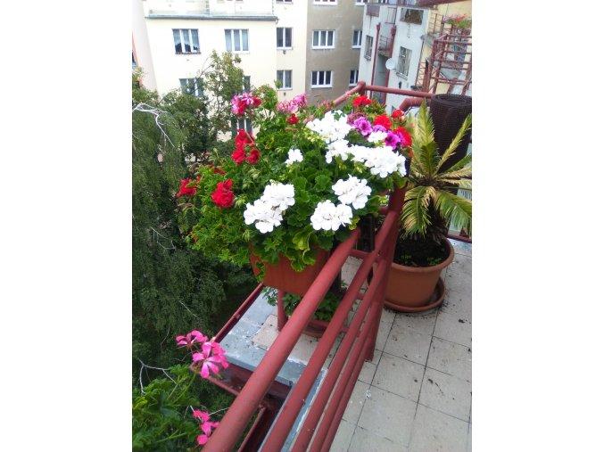 Kvetoucí truhlíky