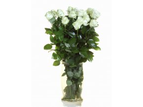 Růže bílá
